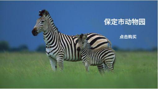【保定市动物园】来与小动物们亲密相约吧!