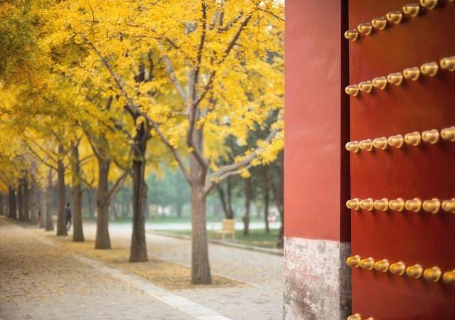 2020北京地坛公园银杏节活动有哪些?