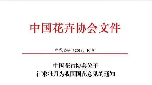 我国国花是什么花?中国花卉协会推荐牡丹为国花征求社会意见