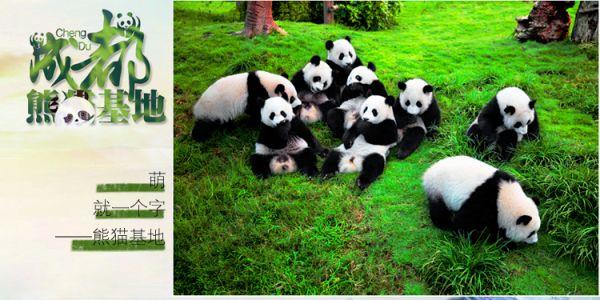 【大熊猫繁育研究基地】萌哒哒的国宝在等你哟~