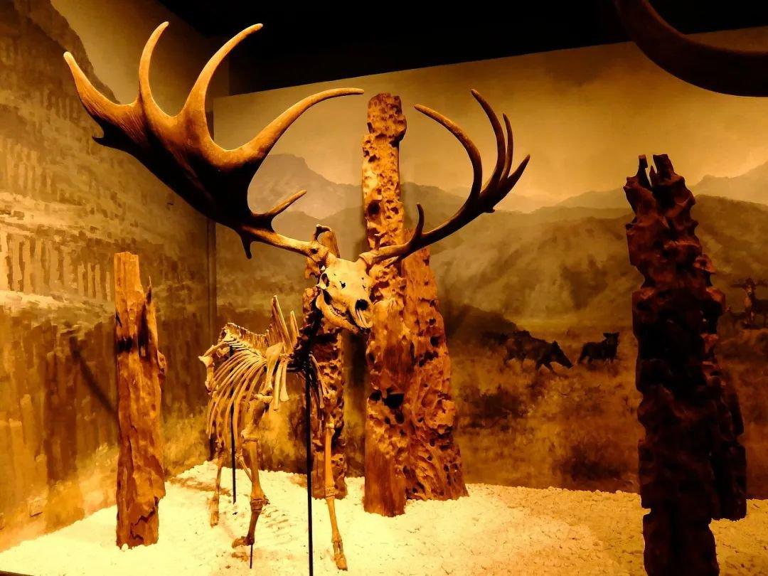 北京自然博物館生命之美公益展亮點有哪些?