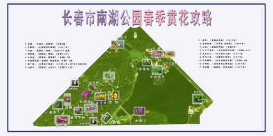 2020长春南湖公园赏花攻略(花期+品种)