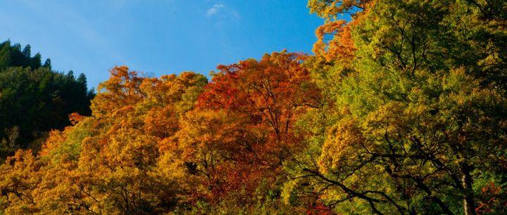 光雾山红叶什么时候红、什么时候最好看