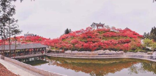 2020重庆五洲园几月能看红叶