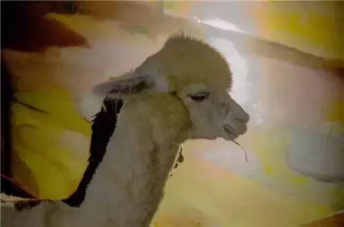 重庆大耳朵口袋动物园门票多少钱?哪些人可以免门票?
