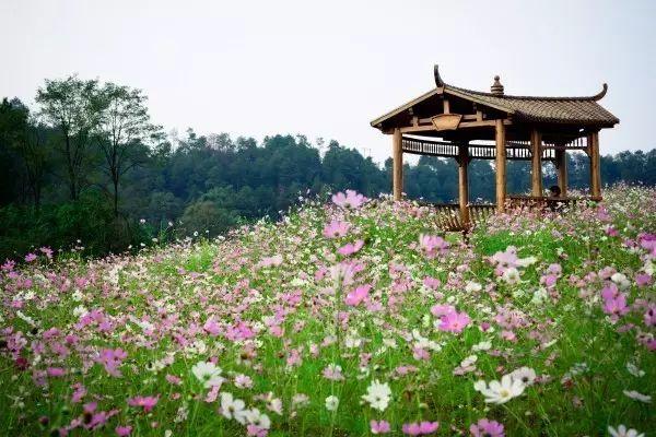 重庆巴南天坪山紫薇花观赏攻略