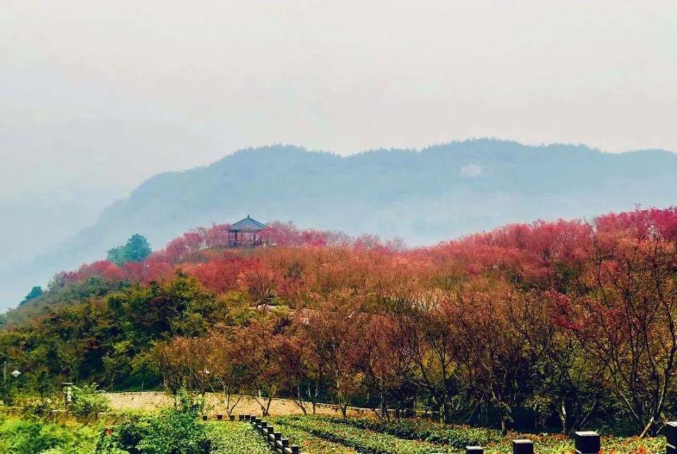 2019重庆南湖多彩植物园红叶节时间、门票、游玩攻略