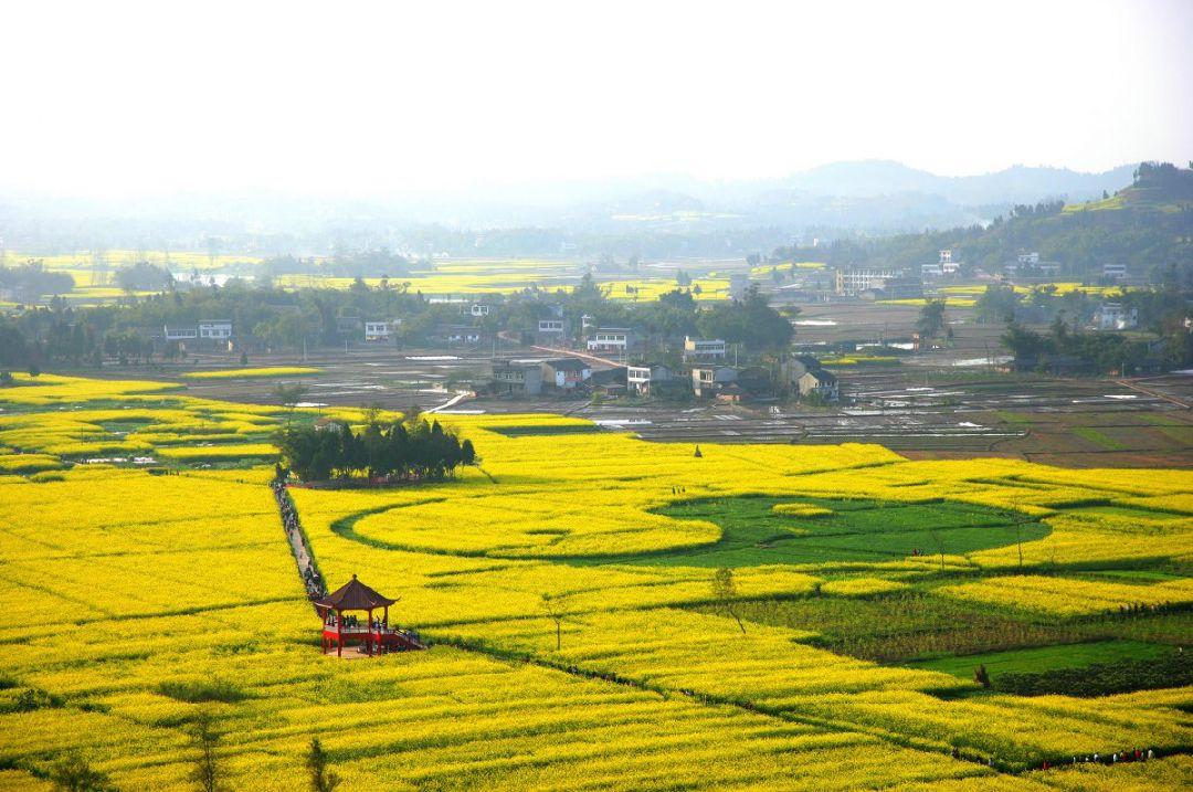 2020年重庆潼南菜花节时间、地点、门票