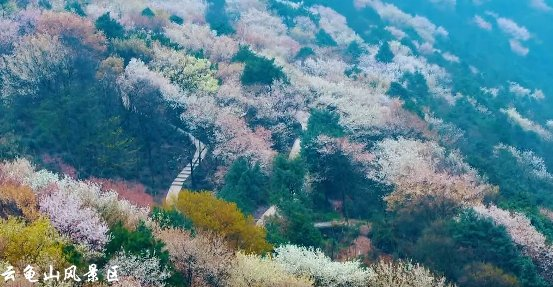 2020重庆渝北大盛云龟山樱花观赏攻略(时间、地点、路线)