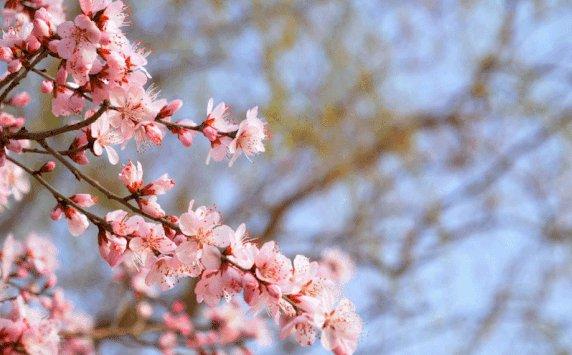 重庆看桃花的地方大盘点