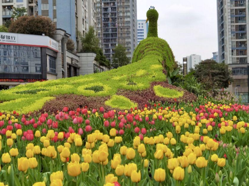 2021重庆巴南郁金香花展时间、地点、门票