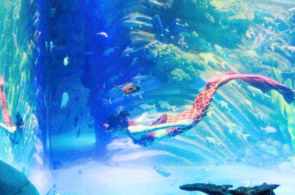 2020重庆幻太奇海洋馆春节优惠门票及购买入口