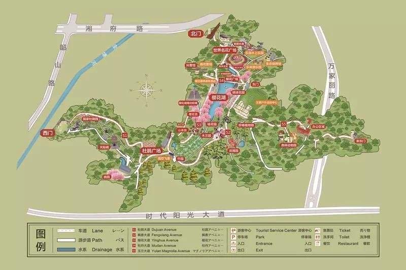 湖南省植物园向日葵在哪里?(附交通指南)