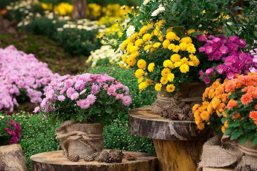 长沙花卉市场有哪些?(附详细地址)