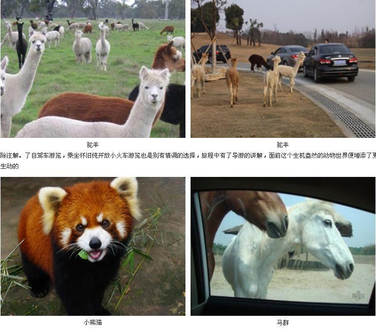 常州旅游攻略 > 常州淹城动物园行程路线推荐    自驾车 步行游览