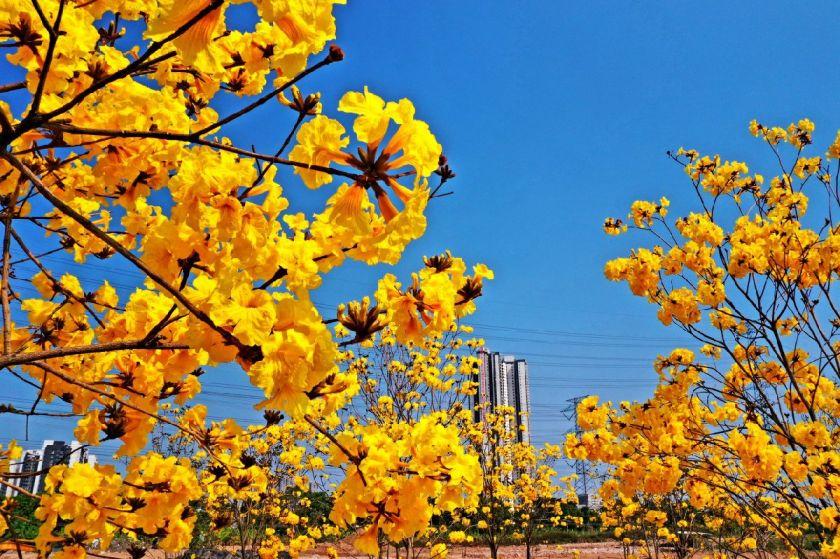 2021東莞春季賞花攻略