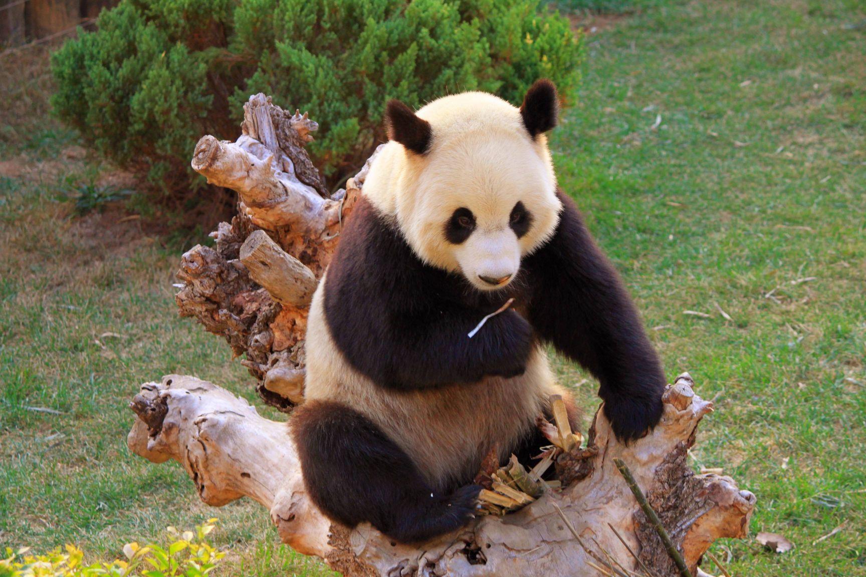 【大连森林动物园】与小动物们来场夏日约会吧!