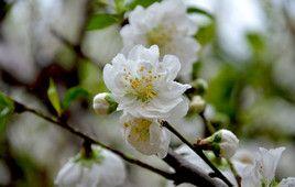 福州赏花景点