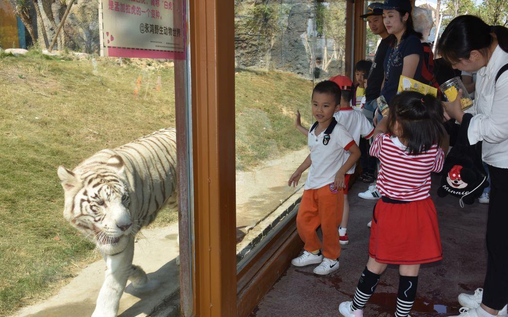 2020福建永鸿野生动物世界春节活动