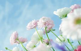 青岛哪里有赏花