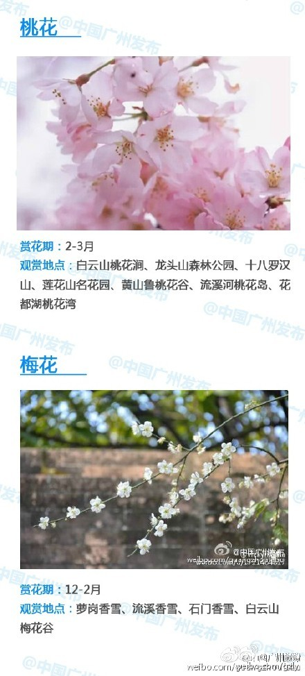 2016广州赏花攻略 全年赏花时间及地点一览