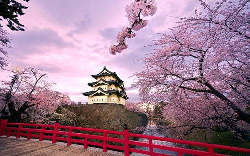 日本樱花什么时候开?2016日本樱花花期预测