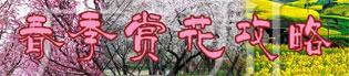 2016广州哪里可以看紫荆花?广州赏紫荆好去处