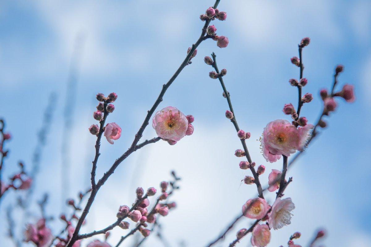 2020春节广州过年花城看花系列活动一览