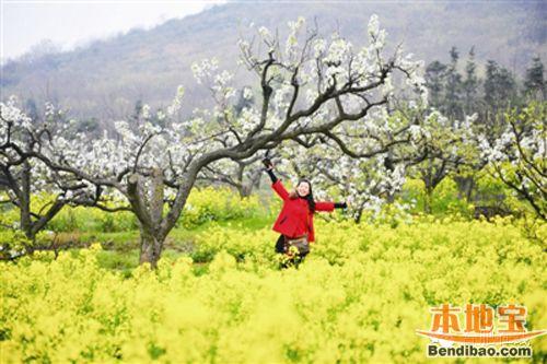 三月带你去看油菜花 盘点合肥及周边赏油菜花好去处