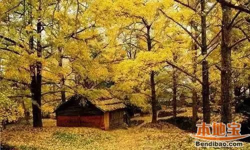 杭州半山国家森林公园赏银杏攻略(景点+路线)