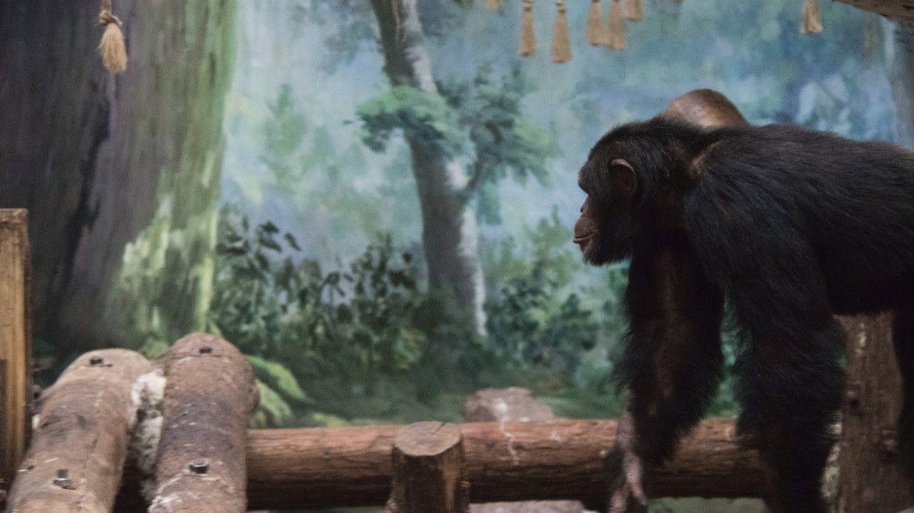 2020端午节杭州动物园游玩指南(门票预约+景点概况+交通攻略)