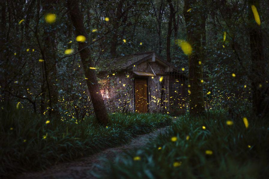 杭州哪些景区能看到萤火虫