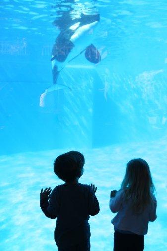 杭州長喬極地海洋公園兒童節活動