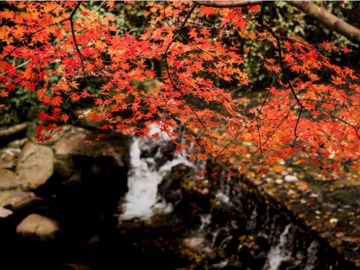 2020杭州红叶观赏地一览