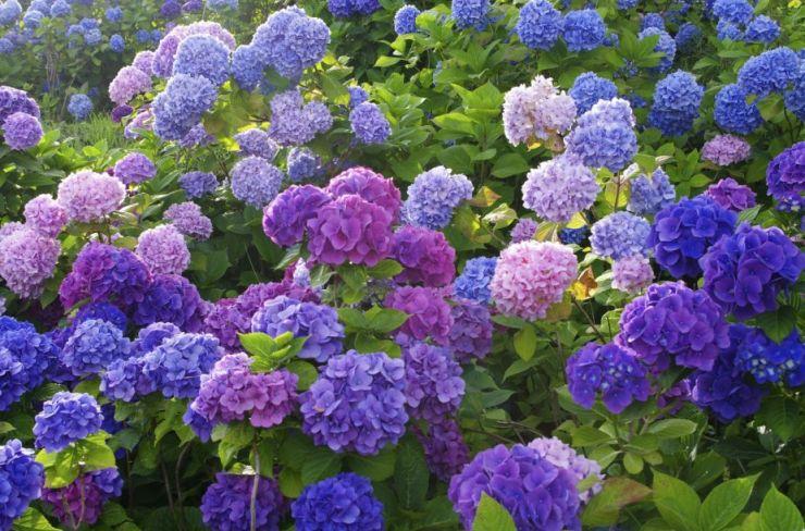 2020年5月杭州吴山的花展时间