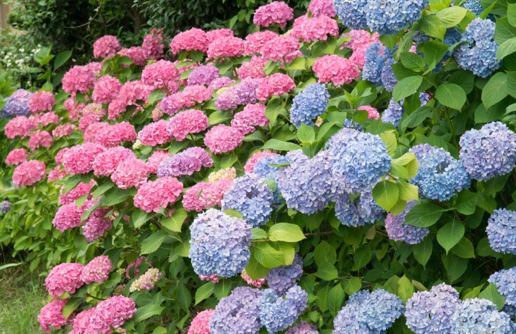 2020杭州绣球花品种最多的公园
