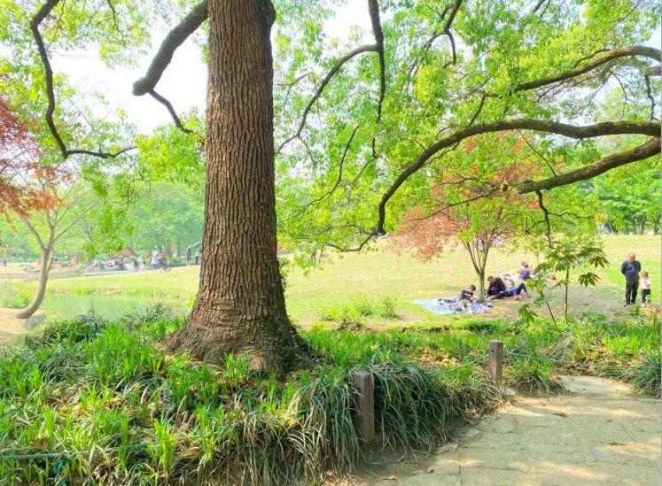 2021杭州太子灣公園還有花可以看嗎?