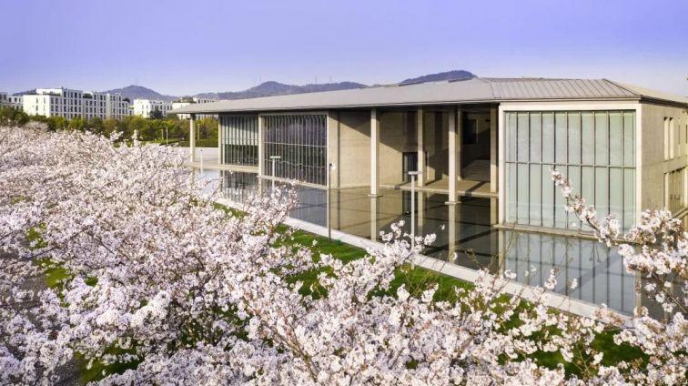 2021大屋頂櫻花季