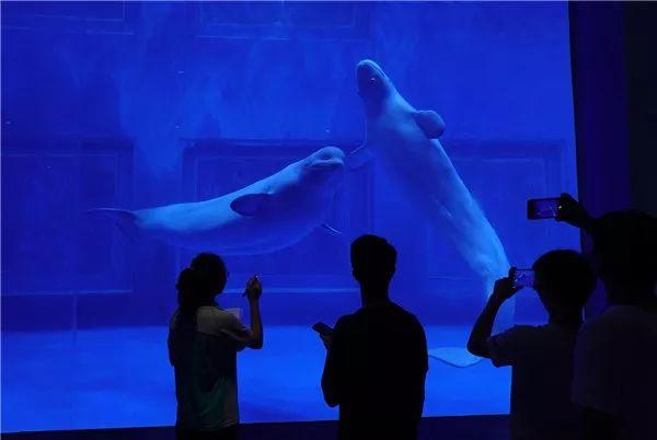 南宁极地海洋公园门票价格是多少