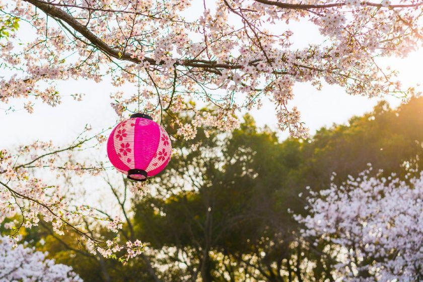 泉州南安英都良山賞櫻花