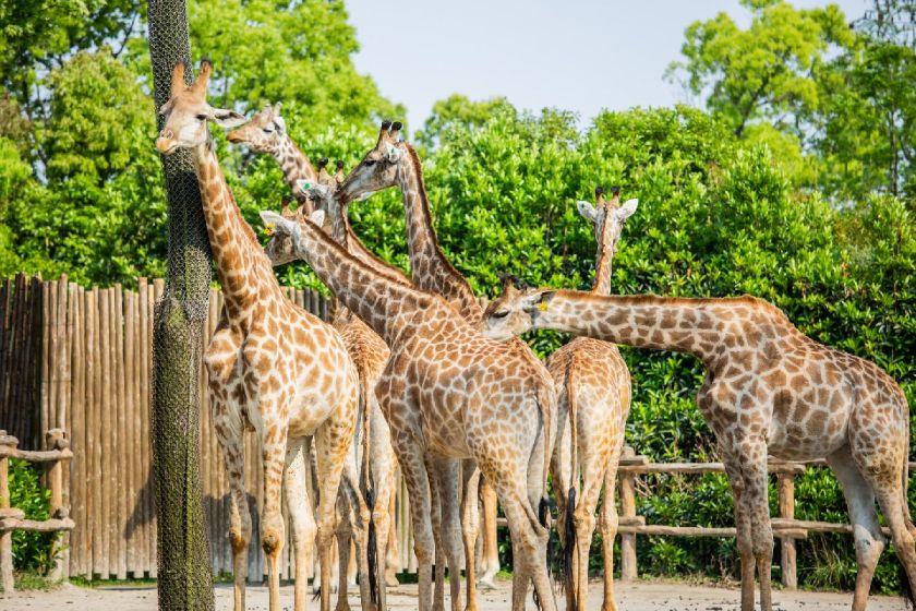 上海野生动物园一日游攻略2021五一