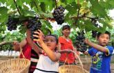 大圩生态农业旅游景区路线推荐