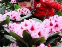 2016北京世界花卉大观园新春游园会攻略