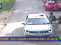 北京八达岭野生动物园老虎袭人过程实拍