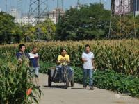 """北京""""世界最贵玉米地""""探访 坐落三环地"""