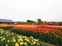 北京世园会2019乐活园艺在世园科普活动