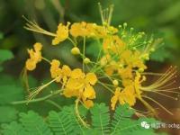 2017秋天广州华南植物园有什么花观赏?
