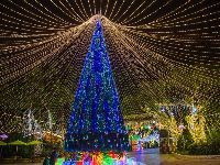 2017广州哪里有圣诞树看?2017广州圣诞