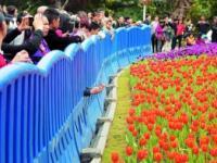 广州海珠国家湿地公园2017春节接待游客
