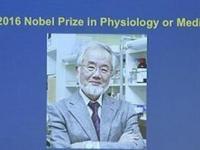 2016诺贝尔生理医学奖揭晓:日本生物学家